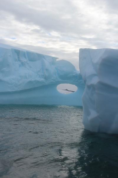 Antarctica 183.JPG