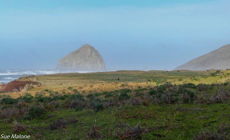 02-16-2021 Exploring the Lost Coast-22.jpg