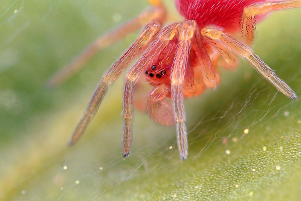 Web-Using Spiders