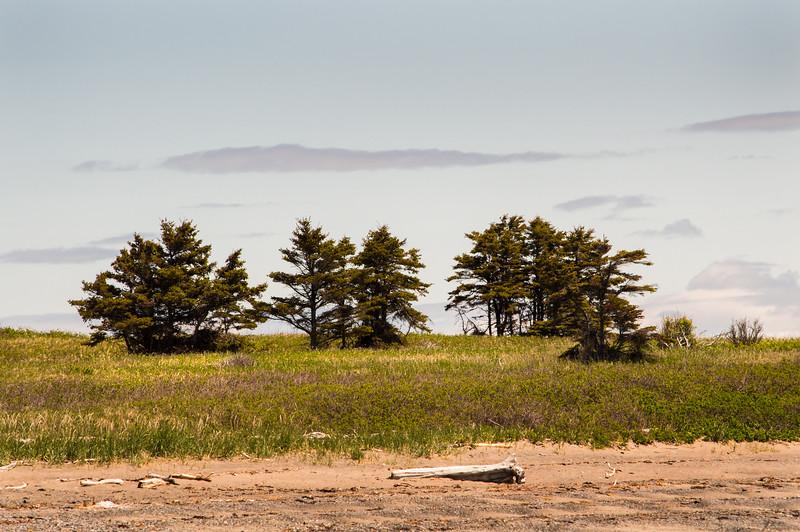 NRenaud-24-prairie.jpg