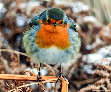 Greeting Cards - Birds