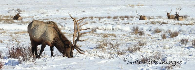 National Elk Refuge - Jackson Hole, Wyoming