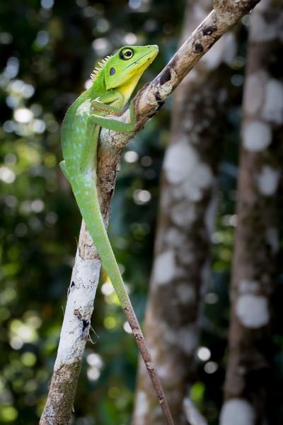 Borneo-2014-77.jpg