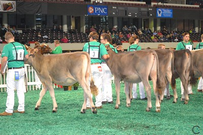 SE Natl Junior Brown Swiss Show 2016