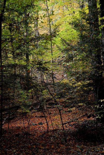 Copake leaves 2.jpg