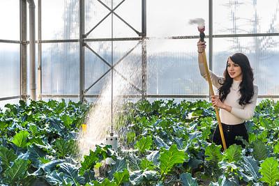 34093 Lab Greenhouse Environmental Portrait Marissa Frazie Davis College November 2017