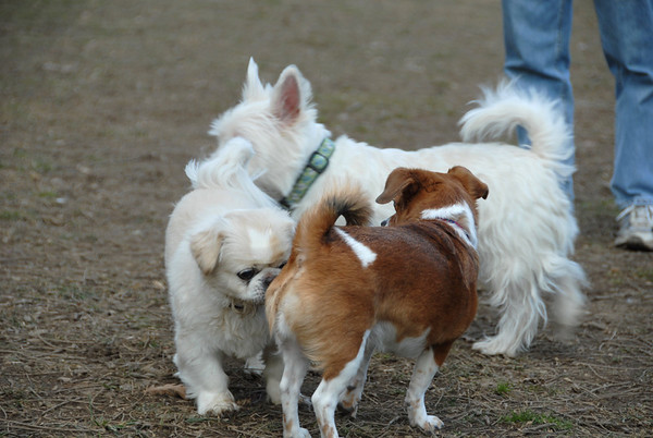 2012-01-07 Morris County Dog Park
