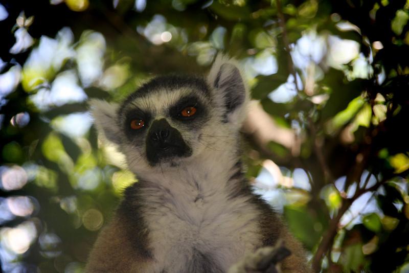 Madagascar, Fauna & Flora 13 Oda.jpg