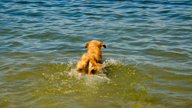 PuppyParty18-268.jpg