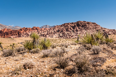 Red Rock Canyon_3274