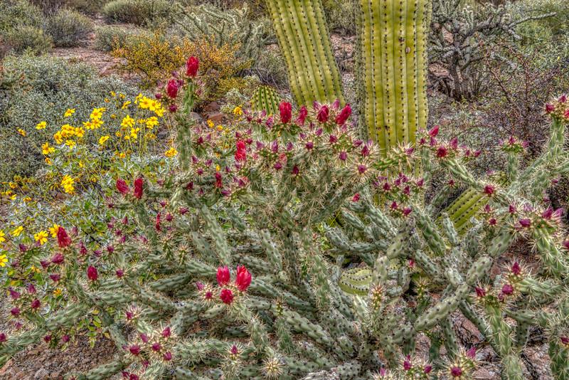 Organ Pipe Cactus 2020-3.jpg