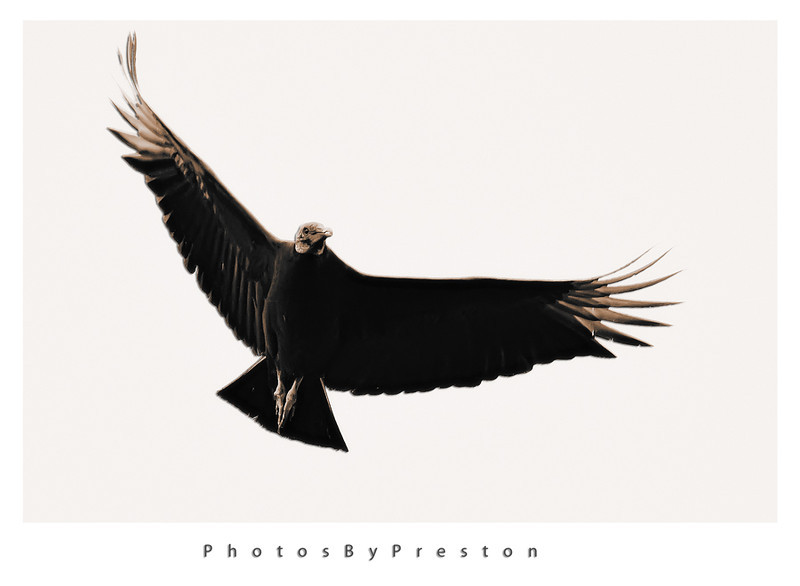 vulturepopuoutnik.jpg