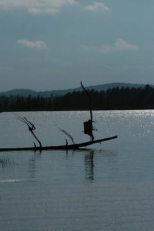 Wood Duck Nesting Box on Big Lake, Maine ©Nature'sArt
