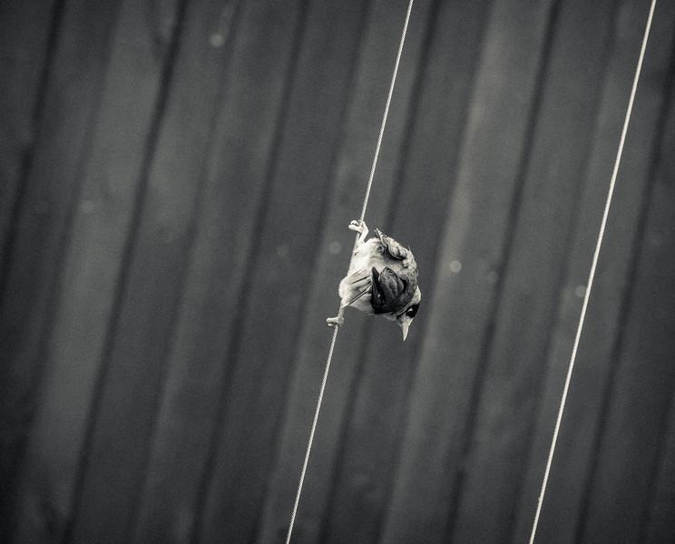 20161230  Bird on a Wire 296  .JPG