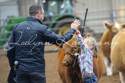 Cattle Showmanship
