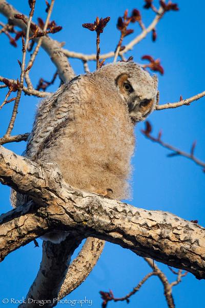 Owl-5.jpg