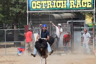 ostrich-race
