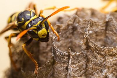 09-08-02 Wasp Nest