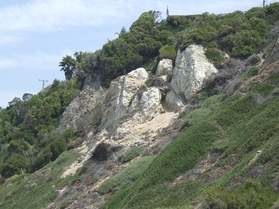 Fossils in Diatomite
