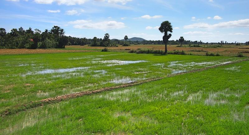 PC309460-rice-fields.jpg