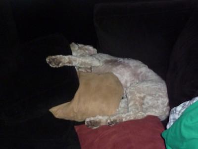Pups Sleeping