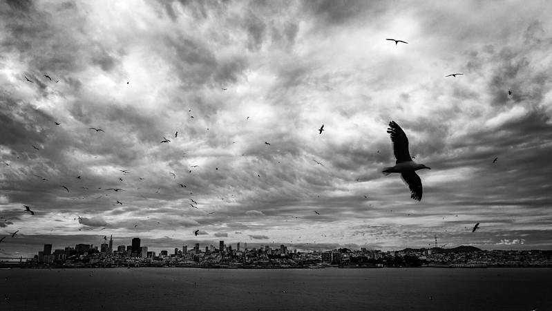 Island of the Seabirds-.jpg