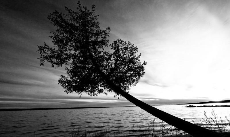 TreeBW.jpg