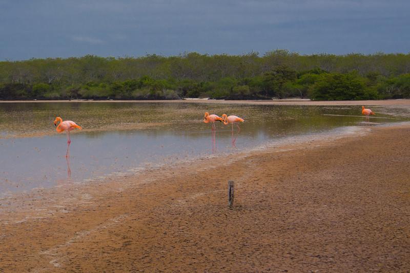 flamingos 3.jpg