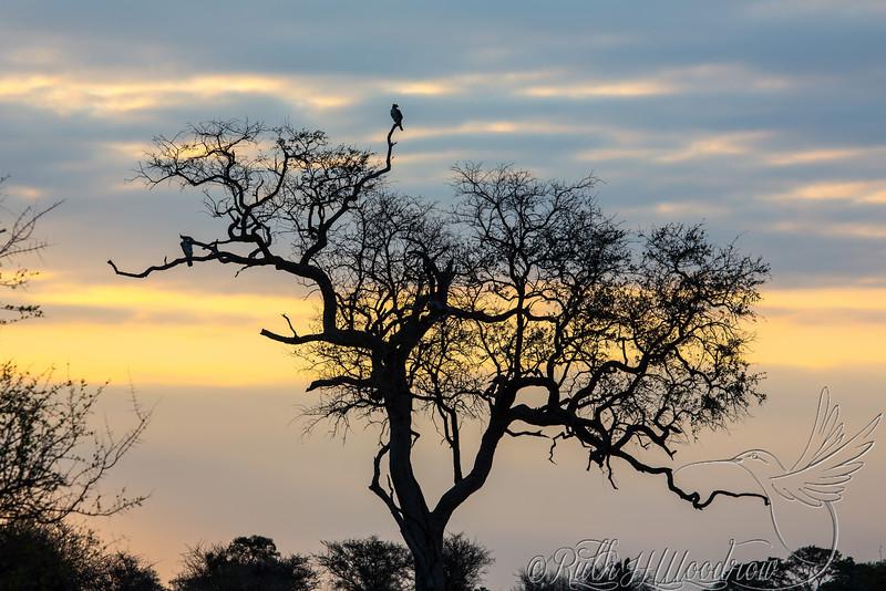 Sunset at Kruger