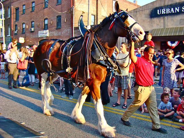 Budweiser Clydesdale Team at Made In America Concert