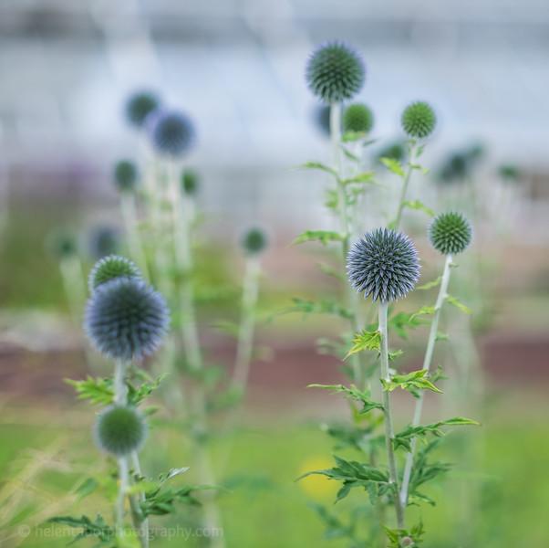 Hob Green garden-1.jpg