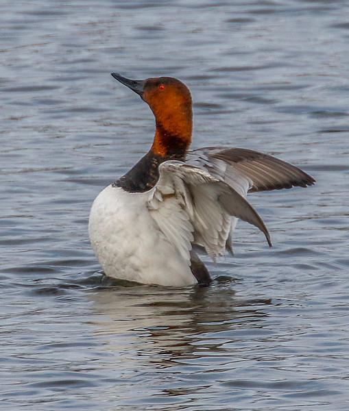 sumg ducks 3.jpg
