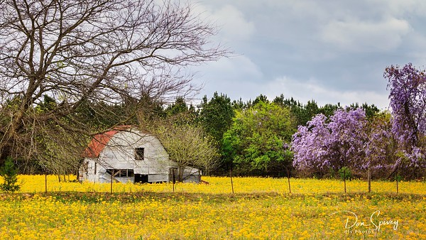 Spring in East Texas