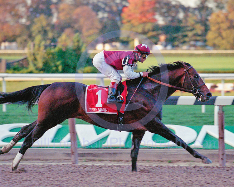 "Bernardini continued his dominance in 2006 by winning the Jocky Club Gold Cup ""under wraps."" and defeating older horses for the first time.  Eventhough Bernardini was beaten by Invasor in the Breeders Cup Classic he was awarded the Eclipse Award as the 3 year old for 2006."