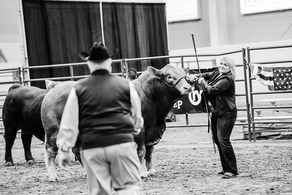 Bull Ring Shots