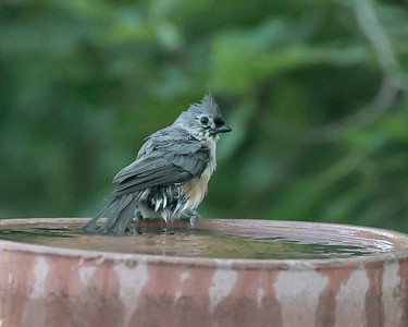 July 6, 2014 in the bird bath