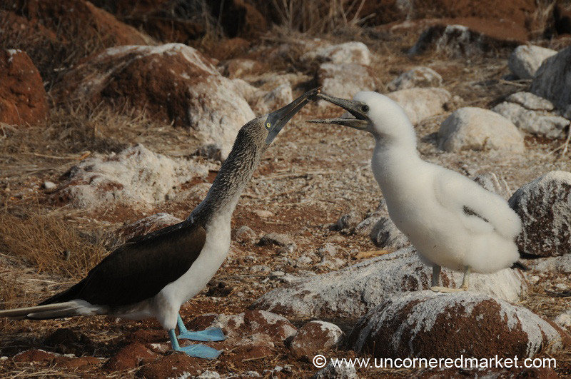 Reaching Out - Galapagos Islands