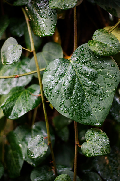 2017-01-07_Botanical_garden_005.jpg