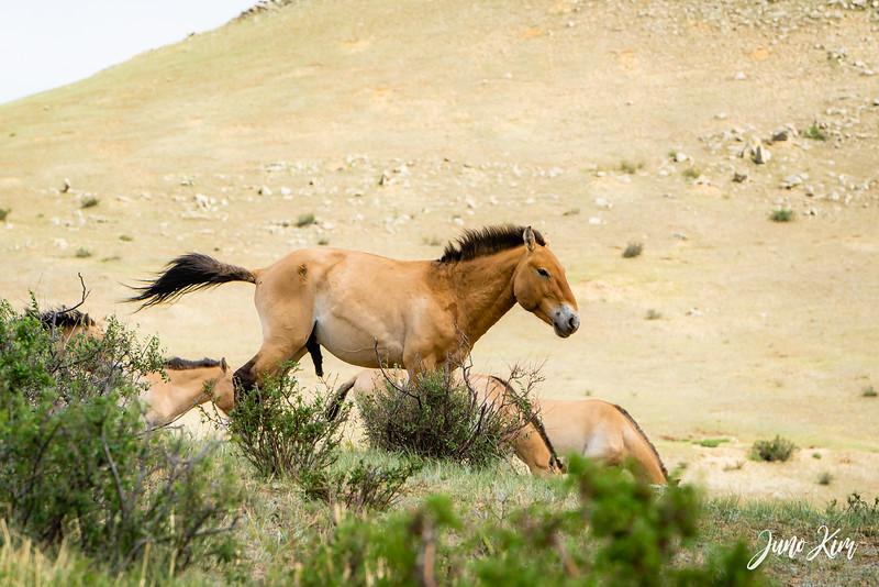 Kustei National Park__6109558-Juno Kim.jpg