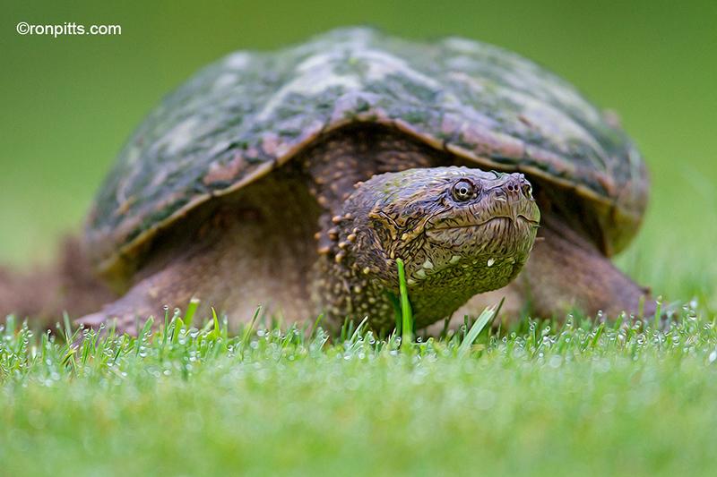 sm_turtle_M4D1033.jpg
