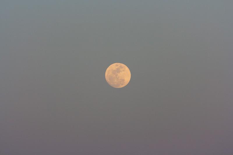 Moonrise, one day before full.
