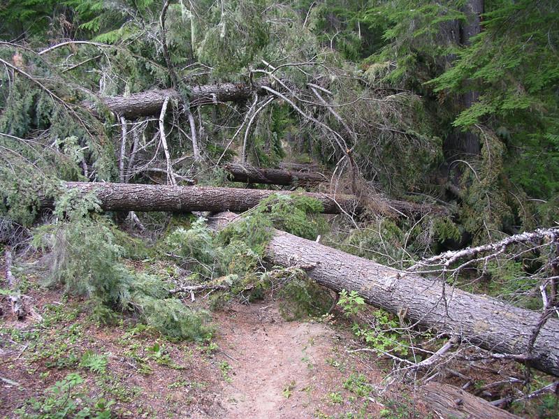 More logs everywhere!