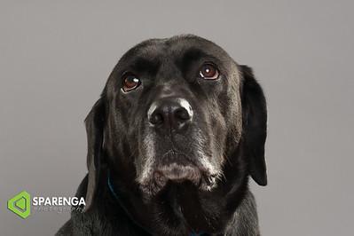 Canine Crews Class Photos 2014