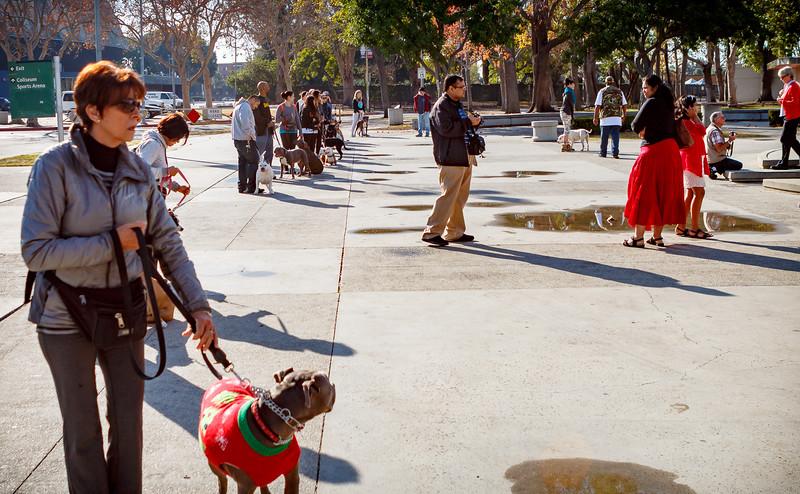 Sunday PitBull School Socialization Class at the LA Coliseum.
