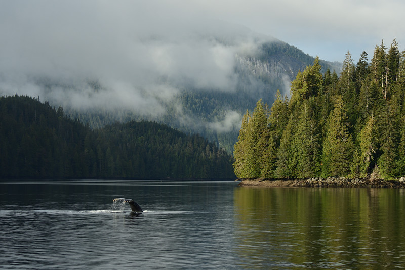 Whales and scenery