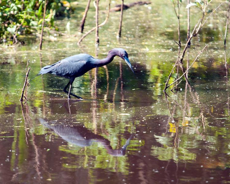 Brazos Bend State Park 2014