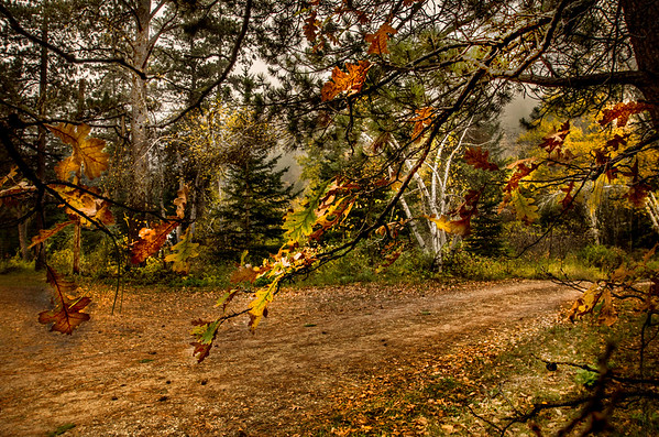 Spearfish Canyon Colors 2015