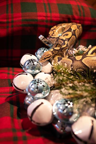 ChristmasSnakes19_0019.jpg