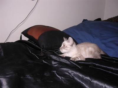 Marley and Luna