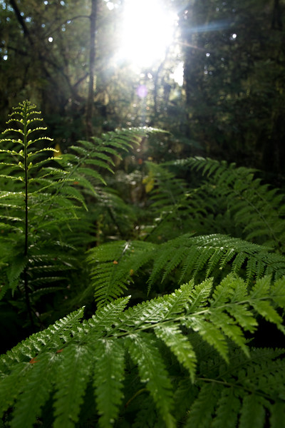 Fern Beams-1.jpg
